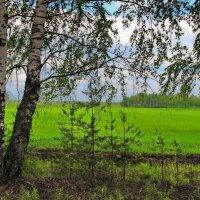 Поле...Русское поле... :: Лесо-Вед (Баранов)