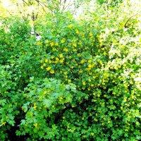Цветущий сад :: alemigun