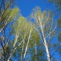 Весна в лесу :: aksakal88