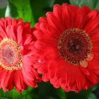 Цветы :: Евгения К