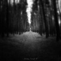 Долгий путь ... :: Дмитрий Призрак