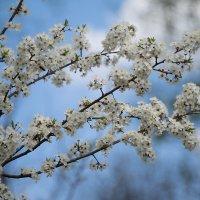 Весна :: Руслан Гончар