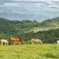 На Кавказе :: Наталья