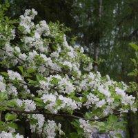 Когда цветут сады :: Валерий Талашов