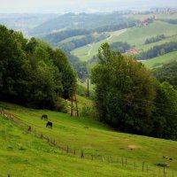 Южная Штирия :: Elena Danek