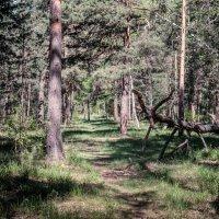 В лесу :: Марк