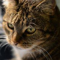 meow :: Аня Струкова