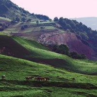 В горах Чечни :: Сахаб Шамилов