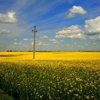 майское поле :: Александр Прокудин
