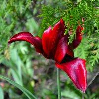 Весна и цветы :: Милешкин Владимир Алексеевич