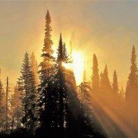 Солнце выкатилось из тумана :: Сергей Чиняев