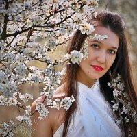 цветущий сад :: Евгений Ромащенко