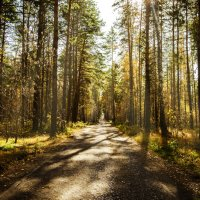 Дорога в лесу :: Дмитрий Новиков