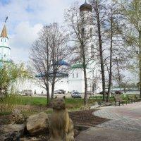 Кот казанский на берегу Раифского озера :: Елена Павлова (Смолова)