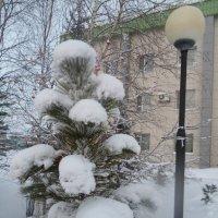 Зима.фонарь... :: Вера