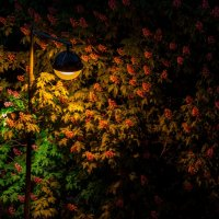 цветы в ночи :: Константин Шабалин