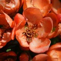 Привлекательное цветение! :: Андрей Образцов