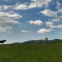 По зеленой траве :: Игорь Кузьмин