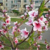 Весна на нашей улице... :: Эля Юрасова