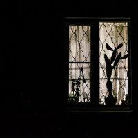 окно :: Птица ~