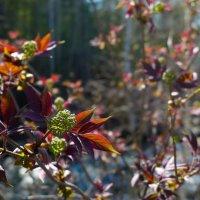 Майские листочки :: Светлана Игнатьева
