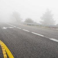 Ежик в тумане :: Анна Аринова