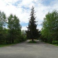 В парке2 :: Александр Подгорный