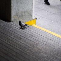 пешком в метро :: Nikita S