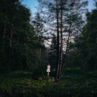 Сказочный лес :: Михаил Лежнёв