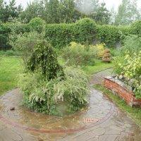 Дождь :: Светлана Ященко