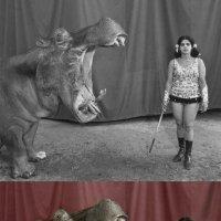 Старый цирк. Дрессировщица и бегемот :: Billie Fox