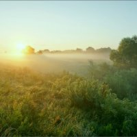 На восходе среди лугов клязьменской поймы. :: Igor Andreev