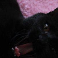 my Cat :: Hasmik Garibdjanyan