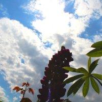 Небо :: Фото Яника
