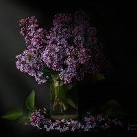 Букет Сирени :: Оксана Романова