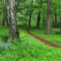С майской зеленью прощаются леса... :: Лесо-Вед (Баранов)