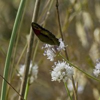 Две параллельные прямые и бабочка-картина маслом :: Shmual Hava Retro