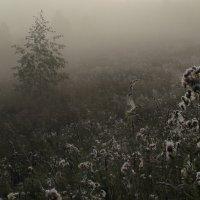 """Из серии """"Туманные хроники."""" :: mike95"""