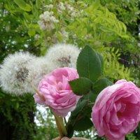 Букет АРО (Акация+Розы+Одуванчики) :: Алекс Аро Аро