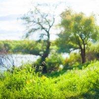 Дерево на берегу :: Андрей Нагайцев