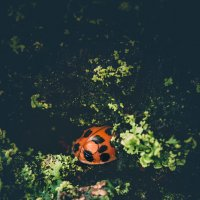 lady bug :: Igor Bakan