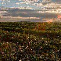 поле :: Сергей Калистратов