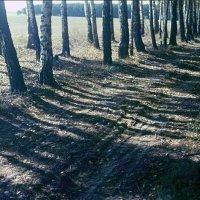 На краю леса :: Сергей Тарабара
