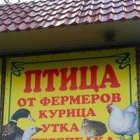 Любая  птица есть у нас....) :: Мила