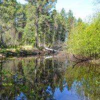 лесные берега :: сергей