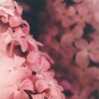 Цветущая Тюмень прекрасна :: Natali Tim