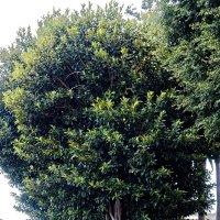 Старое дерево :: Witalij Loewin