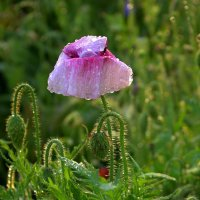 Под дождиком :: оксана косатенко