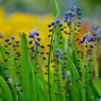 цветы :: Ольга Кирьяшева