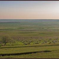 Летние картинки ... :: Сергей Литвинов